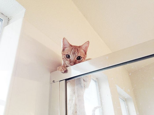 猫に生活を脅かされる25