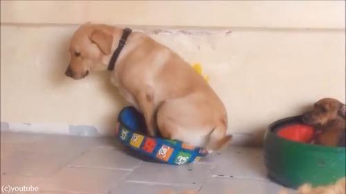 1214犬がベッドを交換したら02
