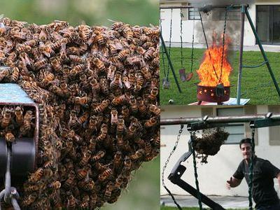 「家にハチの巣が…」素人が繰り広げたムチャな死闘TOP