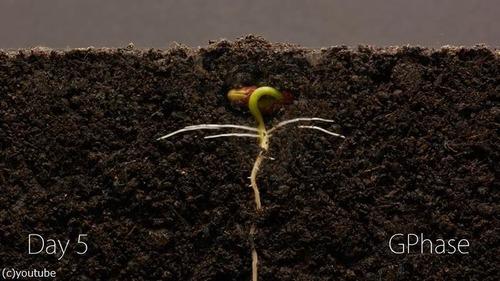 植物タイムラプス03