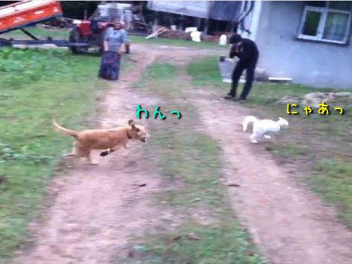 追いかける犬と逃げる猫
