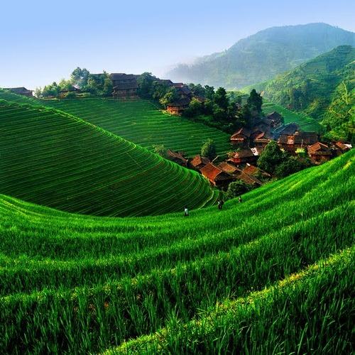 絵画みたいな中国の田んぼ05