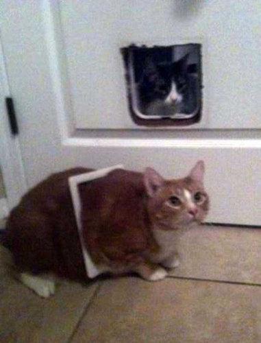 猫の謎の行動10