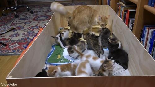 14匹の子猫を育てるママ猫01