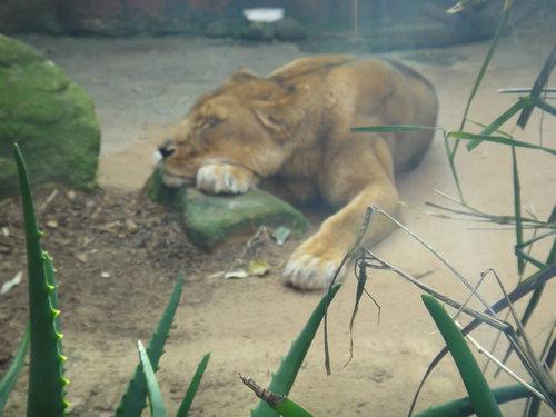 動物園に行ったらみんな寝ていた07