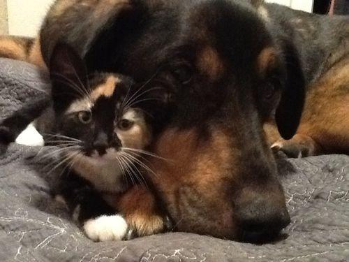 最愛の犬を亡くした猫がとった行動00
