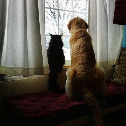 親友の猫を亡くした犬に新しい猫04