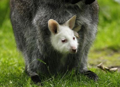 動物の赤ちゃん01