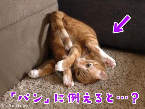 猫をパンにたとえると00