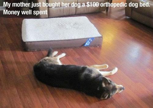 犬の飼い主ならわかること 002