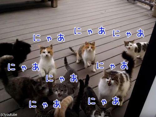 猫の大合唱00