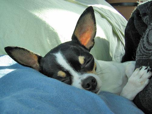 ペットと寝る理想と現実05