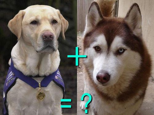 犬の混血A 05
