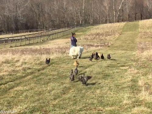 農場で動物と散歩04