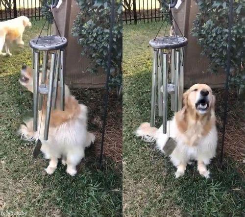 ウィンドチャイムで弾き語りする犬01