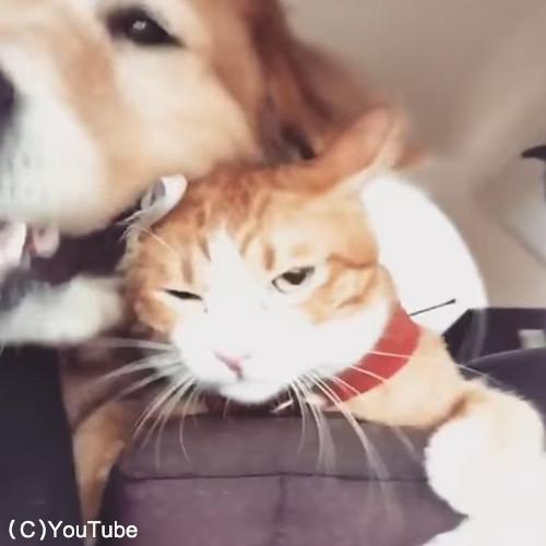 犬と猫のお出かけ03