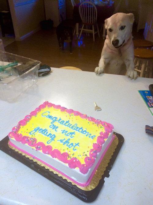 兄の店に拳銃強盗が入ったのでケーキを焼いてあげた01