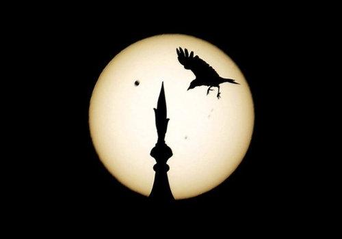金星の太陽通過観測のお知らせ07