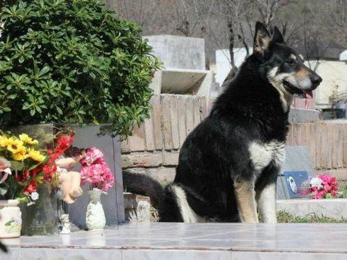 犬を飼うべき理由30