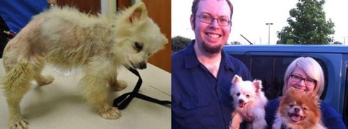 救助された犬や猫17