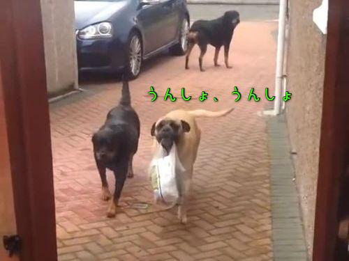 荷物を運ぶ犬00