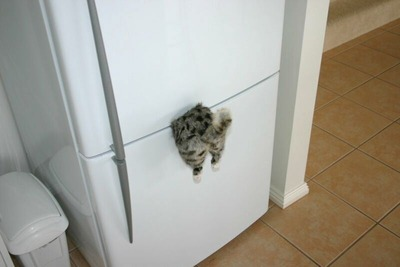冷蔵庫マグネット13