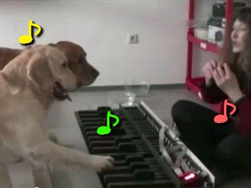 猫ふんじゃったをピアノ演奏する犬
