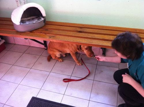 犬や猫が獣医に連れて行かれることを察知したとき05