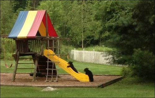 裏庭で遊ぶクマ02