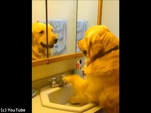 賢すぎる犬「喉乾いたワン」00