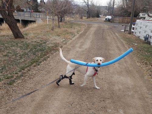 滑車の犬02