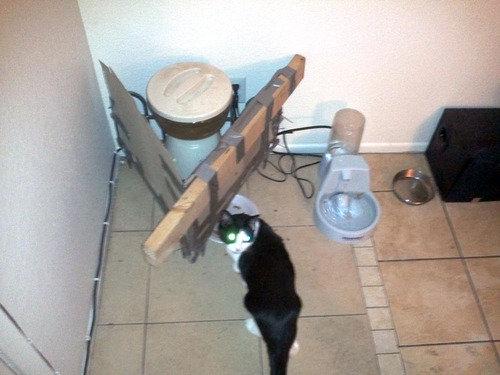 猫の自動エサやり機10