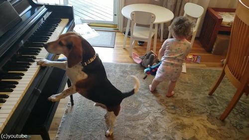 ピアノ弾き語りをする犬と踊る女児01