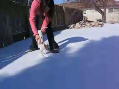 寒がりな犬