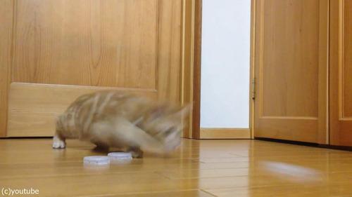 猫ゴールキーパー02