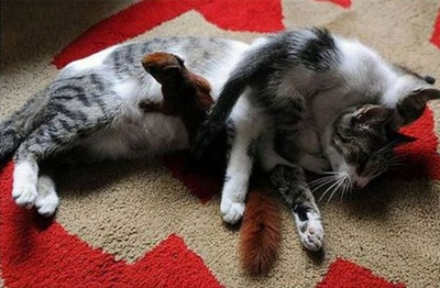 リスと猫07
