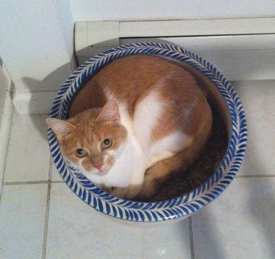 猫ってヤツは…03