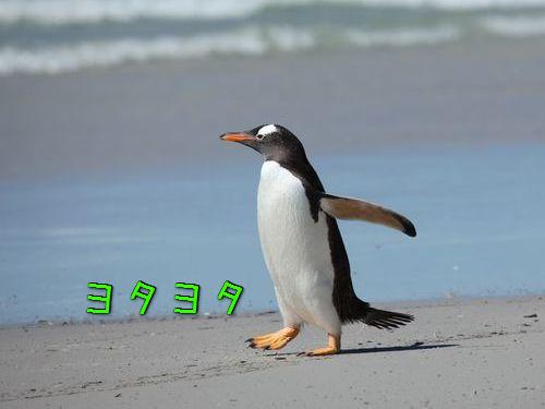 ペンギンにひざ00