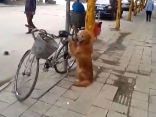 自転車の警備をする犬01