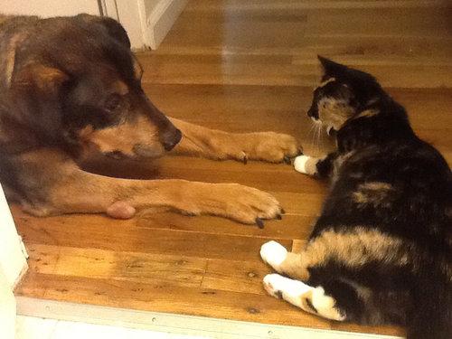 最愛の犬を亡くした猫がとった行動06