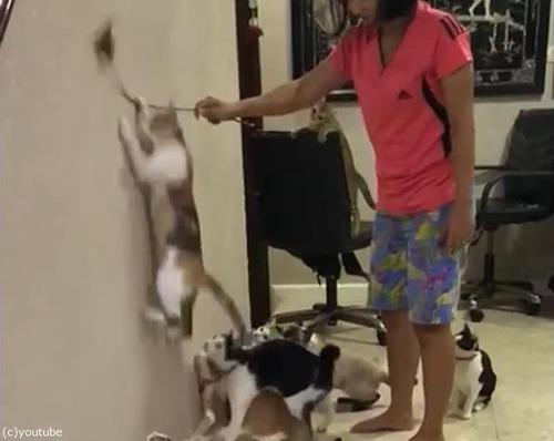 猫じゃらしと猫軍団01