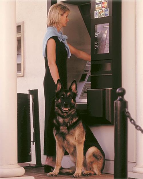 海外のATMと犬01