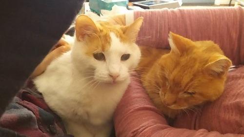 猫を2匹飼った理由07