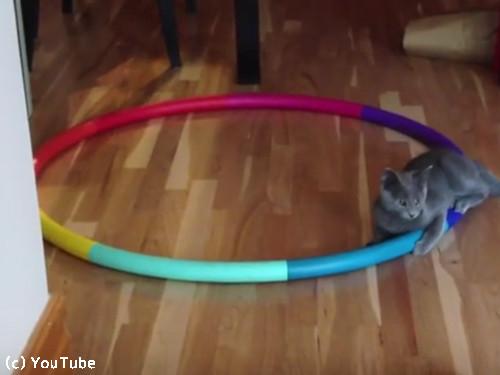 猫フラフープ03
