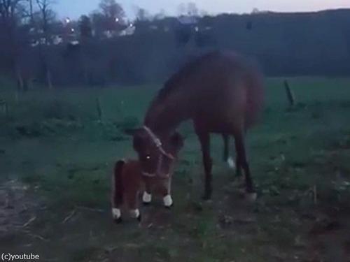 馬とぬいぐるみの馬01