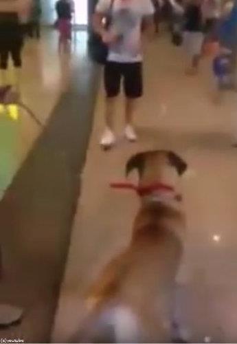 飼い主と3年ぶりに再会した犬01