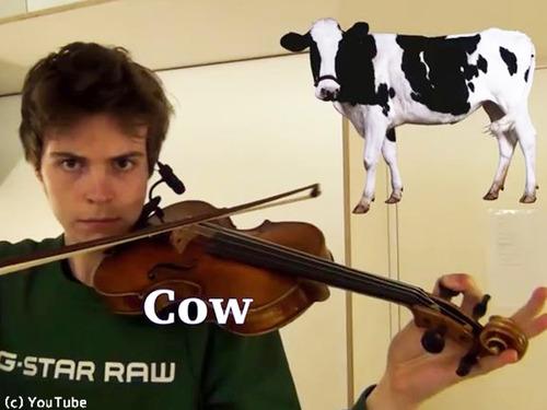 ヴァイオリニストが動物の鳴き声を演奏する00