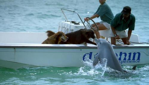 イルカを体験