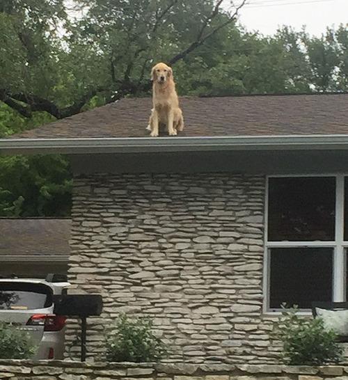 屋根の上にいる犬01