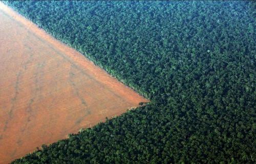 アマゾンの伐採01